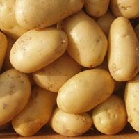 Indian Fresh Potato