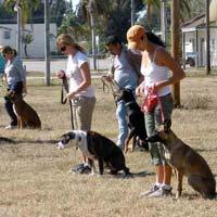 Dog Advanced Training