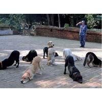 Dog Basic Training