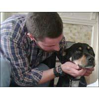 Dog Care Service