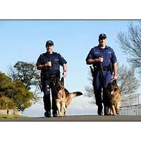 Dog Security Training