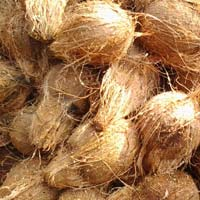 Indian Coconuts