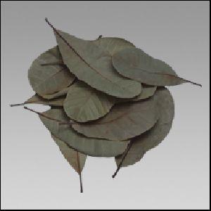 kendu leaf