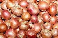 Saurashtra Onion