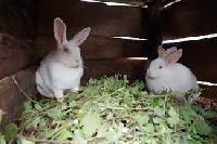 Rabbit Feeds