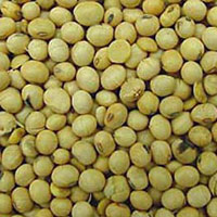 Soyabean Seeds
