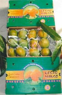 Organic Keshar Mango