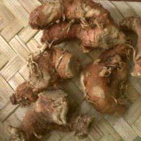 Galangal Roots