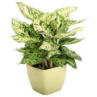 Home Decorative Plant