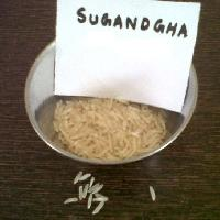 Sugandha Rice