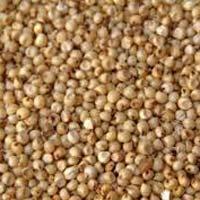Jowar Seeds (for Bird Feeding Purposes Only)