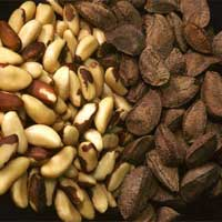 Brazil Cashew Nut Shell,Cashew Nut Shell from brazilian ...