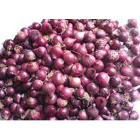 Bangalore Rose Onion