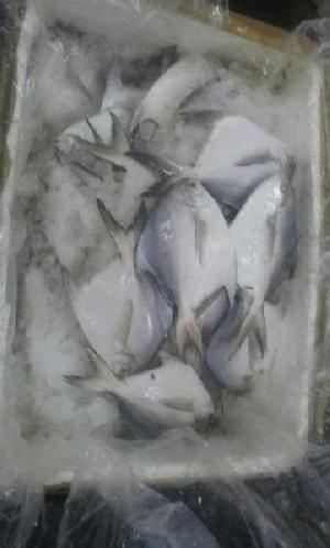 Fresh Chilled Fish