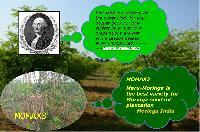 Momax3 Moringa Perennial Seed