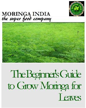 Densitive Moringa Farming System
