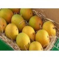Mango - Alphonso