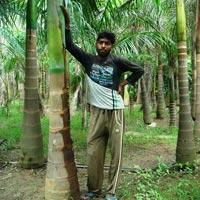 Bottle Palm Plant