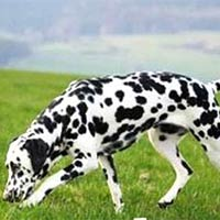 Pharmaceutical Veterinary Medicines