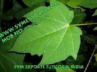 Papaya Leaves Exporters India