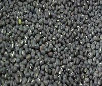 Black Urad Beans