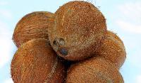 Salem Coconut