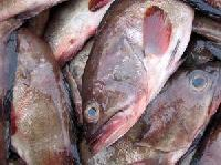 Frozen Grouper Fish