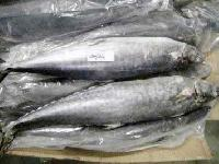 Frozen King Fish