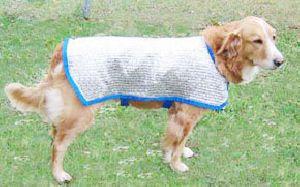 COOL DOG COAT