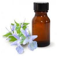 Patchouli oil natural