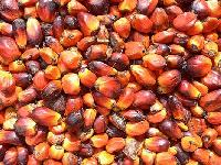 Best Cocoa Coffee Beans.crude Palm Oil,sun Flower Oil,crude Rubber,palm Kennel Nuts For Sell.