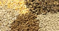 Cattle Feed Raw Materials