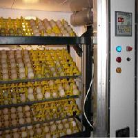 Poultry Hatchery