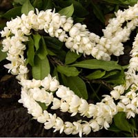 Jasmine Flower Garlands