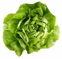 Curly Lettuce