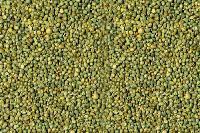 green millet grain