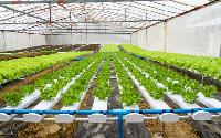 Hydroponic Farming Systems