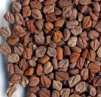Fenugreek Seed Extract