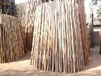 Casuarina Wood Poles