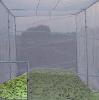 Seedling Tent Greenhouses