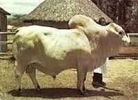 Livestock Breeders