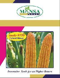 Maize Seeds (janki-9730)