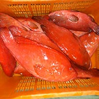 Fresh Chilled Red Grouper Fish
