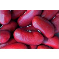White Red Kidney Beans
