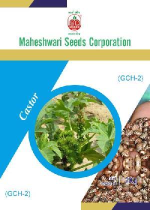 Gch-2 Castor Seeds