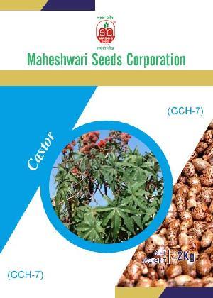 GCH-7 Castor Seeds