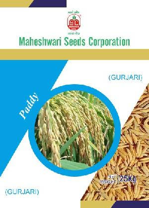 Gurjari Paddy Seeds