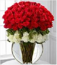 Solitaire Roses