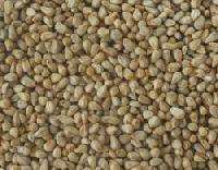 Hybrid Seeds