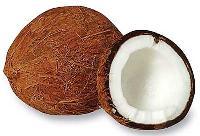 Coconut-02